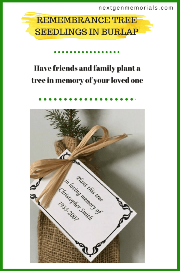 Remembrance tree seedlings in burlap