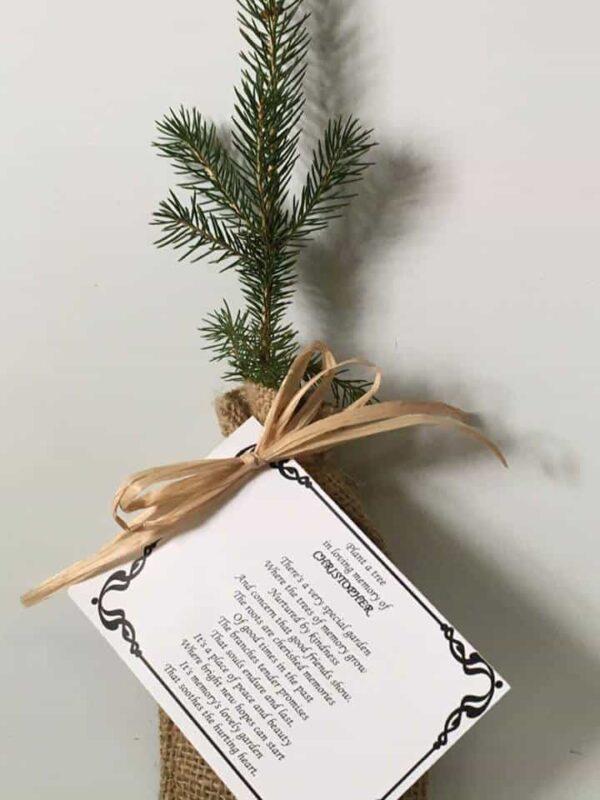 Seedling with prayer card