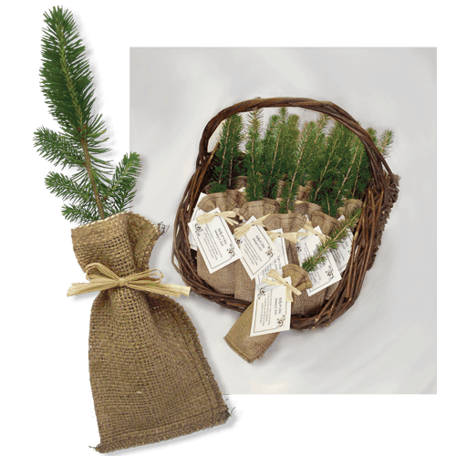 Remembrance Tree Seedlings In Burlap Personalized Sympathy Tree Gift