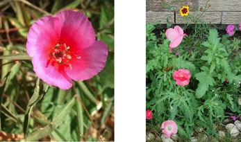 Seed paper flowers growing in garden