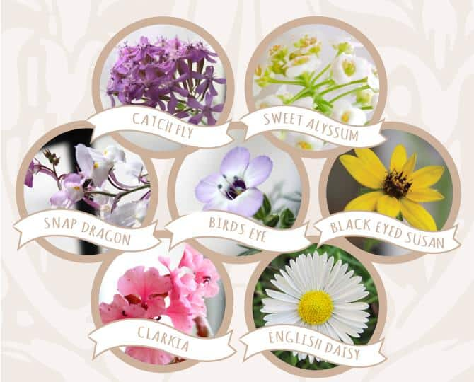 Wildflower Seeds In Plantable Heart Cards Types Of